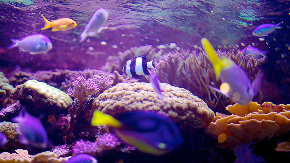 Living-Planet-Aquarium-28971.jpg